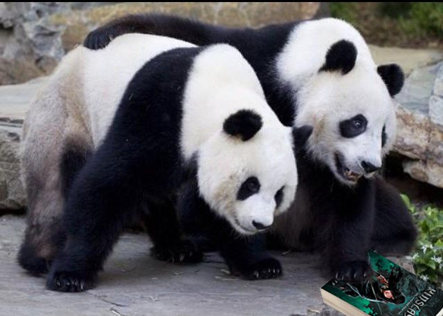 THERE ARE NO PANDAS IN JAPAN